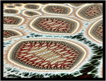 Geomandian Water Lilies by OttoMagusDigitalArt