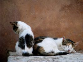 Kitten's rest by Rhomium