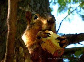A squirrel and her apple by teriathanin