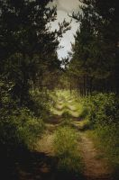 The Trail by msteenphotographer