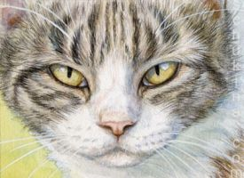 ACEO Tabby Pussy by sschukina