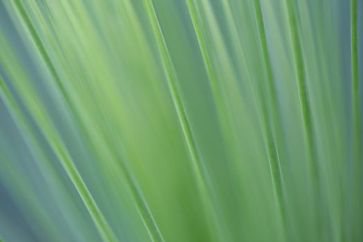 Abstracts of Nature VI by LydiaRhianne