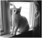 Chloe_Black_and_White by LindaLee