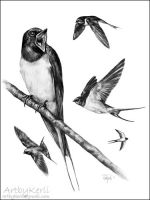 Barn Swallow composition by ArtbyKerli