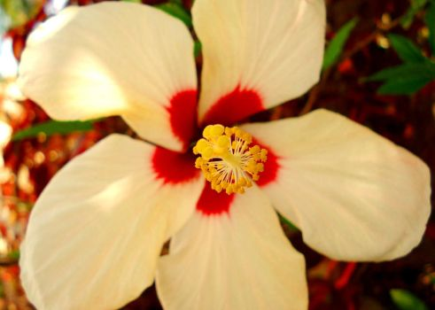 White Hibiscus by DarkSecretPlace