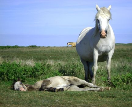 Wild Horse and Foal by SymphonyOfSolace