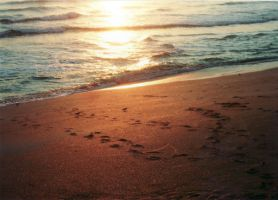 footprints by the golden wave by 4EverUnknown