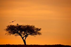 My Africa 40 by catman-suha