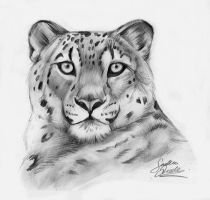 Pencil leopard by TheMysticWolf