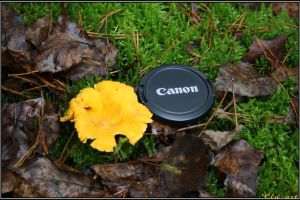 Giant Chanterelle by Clu-art