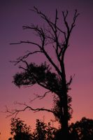 Sunset Silhouette by marisamudd