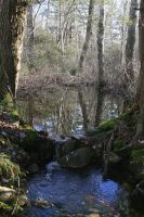 Pafford Springs 2 by Crematia18