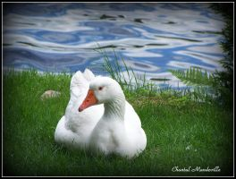 Miss Goose by artistmember
