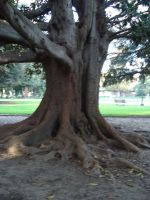 Ring-Around-The-Tree by CoFFeH