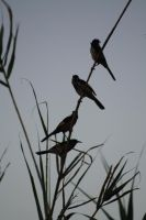Bamboo birds by lunagriff