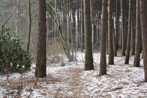 Winter forest 5 by Kiwiaa-Stock