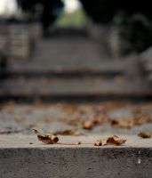 leaves by pedro4d