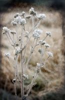 a touch of frost by RickHaigh