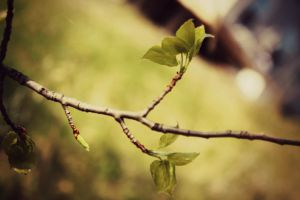 Twig by AutumnVisionary