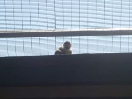 peeping little monkey by lilminx29