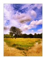 Hampstead Heath by mizarek