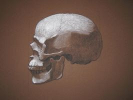 Another skull study 2012 by spener88