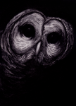Barred Owl : Charcoal Rendition by IncrediblyForkable