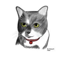 My cat Lucky R.I.P by oOstaceyOo