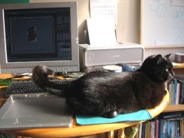 Cat on Mouse by melemel