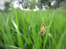 Grass Spider by LifeIsToBeHappy