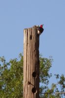Wood Pecker by looking-for-hope