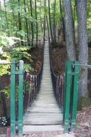 Bridge in the Forest by NoviNowotny