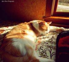 Sunlit Slumber by GlassHouse-1
