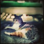 Noble cat by esimsir