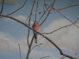 bird on a branch by Endeavor4ever