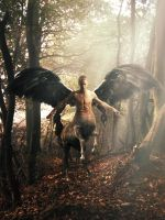 Winged Centaur by theroof09