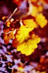 Autumn leaf. by maziak-ciut-inaczej