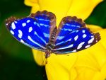 Butterfly04 by gordo99