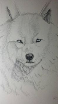 the wolf by wolf1995p