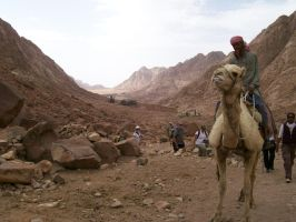 Camel, Monestary and Sinai Valley by I-Artemis-I