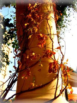 aged autumn blooms by jewelle