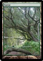 Magic Forest Cumberland Island Photo Card II by lizking10152011