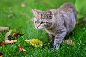 Sneaking cat by ZoranPhoto