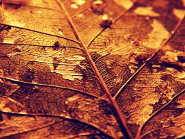 Golden leaflet by EyeDoorCinema
