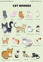 Cat breed poster by maielbertz