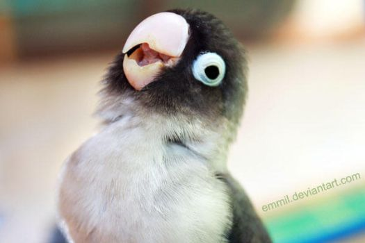 A parrot's smile by emmil