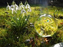 Glass sphere and flowers in the sunlight by Acrylicdreams