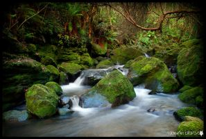 Ross creek 7 by shadowfoxcreative