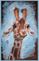 portrait of the giraffe by MiracleAyano