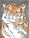 Tigers by Prosido